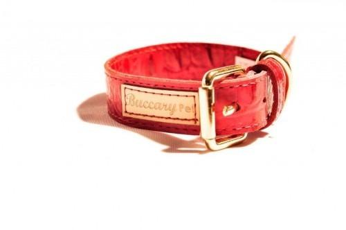 Coleira Cachorro Couro Croco Vermelha P Promoção Barato Cachorros Filhotes