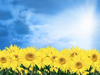 Painel Lona Banner Flores Girassol