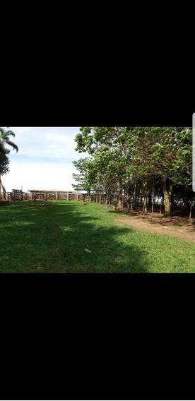 Fazenda A Venda Em Inocência - Ms (pecuária) - 794