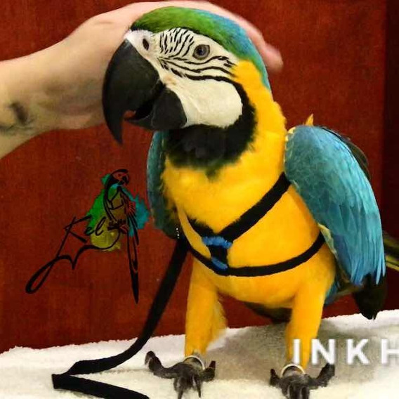 Guia Peitoral Para Arara Canindé Papagaio E Outros