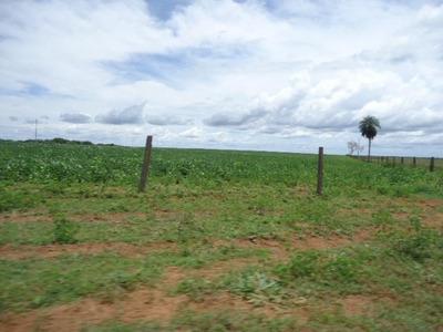 Fazenda Em Novo Paraíso - Am, 500 Hec P/ Soja - 113