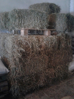Fardos De Alfalfa En Caba