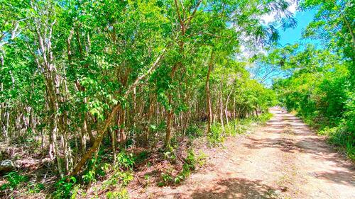 Imagen 1 de 13 de Hermosos Terrenos Titulados En Zona Urbana De Puerto Morelos
