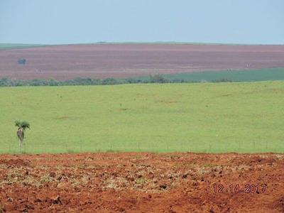 Fazenda A Venda Em Dourados Ms (agricultura) - 858