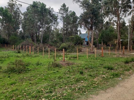 2 Padrones En Punta Negra Con Títulos Y Cercados.area:1312mc