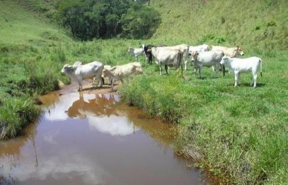Fazenda Com 250 Alqueires Em Piracaia - 594