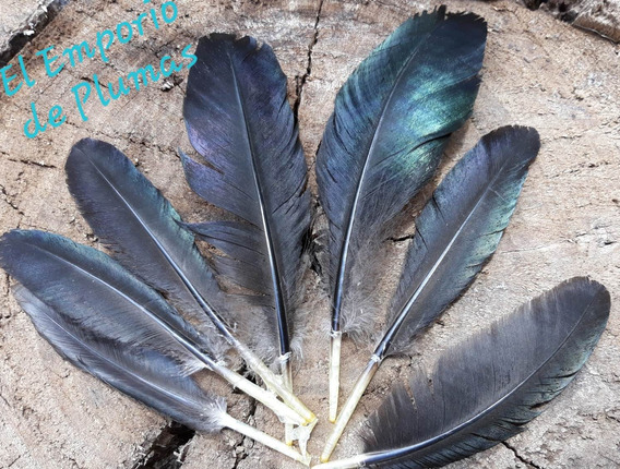Plumas Naturales Brillantes Negras Tornasoladas Y Blancas
