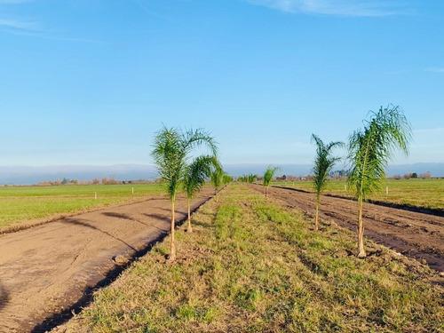 Vendo Terreno  Estancia Las Moras Todos Los Servicios
