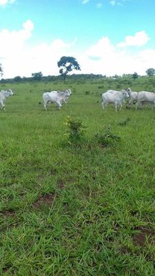 Fazenda A Venda Em Figueirão -ms (pecuária) - 877