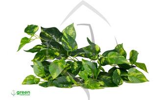 Vegetación Artificial Julieta Green Warehouse 6 Piezas