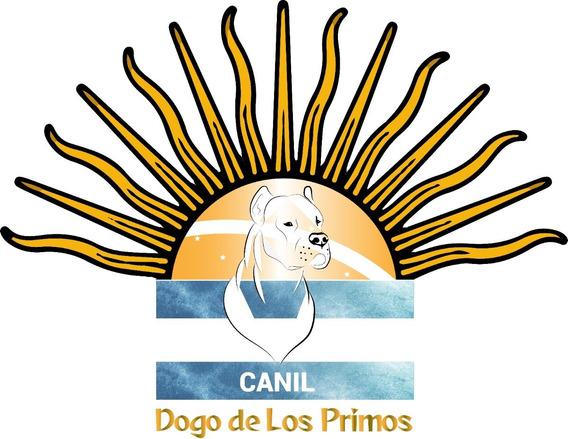 Filhotes Dogo Argentino - Pedigree Cbkc-fci