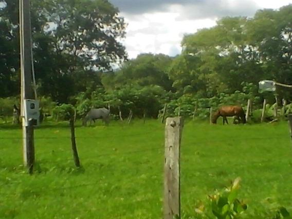 Fazenda No Tocantis