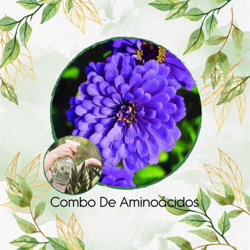 Combo De Aminoácidos Concentrado Zinnia Flor Gig. Azul