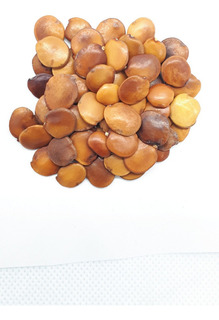 500 Semillas De Gliricidia Sepium (cocoite, Mataraton)