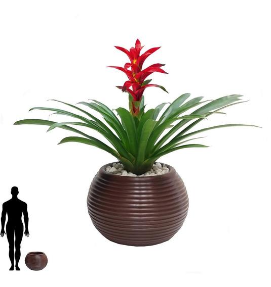 1 Vaso Plantas Black Friday Solitario Grande Forte B 30x40