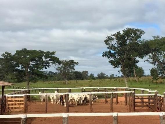 Fazenda Com 2758 Hectares No Mato Grosso- Mt