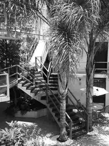 Departamento En Renta Casuarinas, La Palma