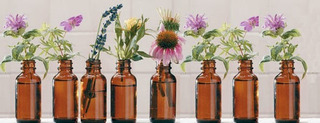 Tinturas Madres De Hierbas ,medicina Tradicional Wuilliche