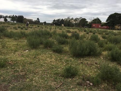 Imagen 1 de 6 de Gran Oportunidad!! Buen Terreno En Camino Mendoza