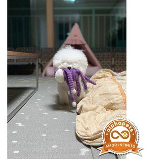 Cachorros Poodle Exclusivos Envíos Nacionales