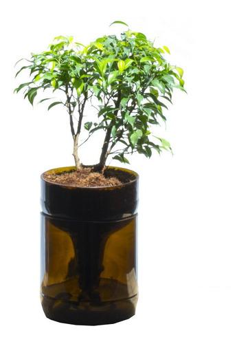 Ficus Benjamina Little Plant 22, Maceta Autorregante