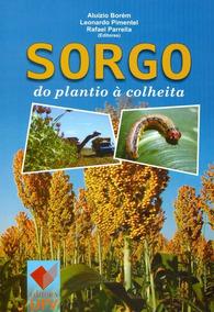 Sorgo: Do Plantio À Colheita