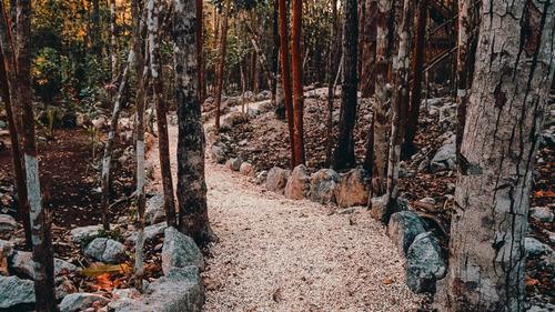 Imagen 1 de 30 de Lote De  1 Hectárea En Comunidad Eco Sustentable En Tulum P1970