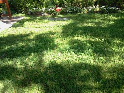 Jardin Familiar En Jardin De Paz De Rodriguez