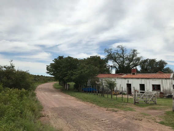 Excelente Campo El Carrizal S/ Camino Real De 555 Ha.