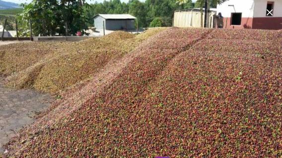 Fazenda De Café 1900 Hectares Região De Bambui Mg