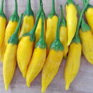 10 Sementes De Pimenta Lemon Drop Pepper Aji Chili Capsicum