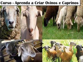Apostila De Criação De Ovinos E Caprinos/ Ovelhas E Cabras.