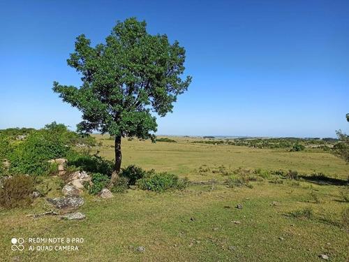 Se Venden 236 Hectáreas, Sobre Ruta 7, Entre Batlle Y Ordóñez Y Valentines. Campo De Sierra, Con Aptitud Ganadero Forestal.