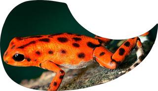 Escudo Palheteira Resinada Violão Aço Orange Frog