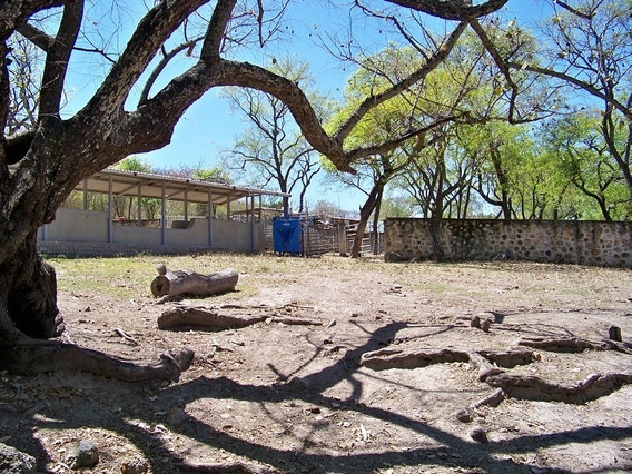 Rancho Ganadero O Agave Con Abundante Agua Zona Tesistan