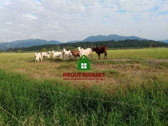 Fazenda, 200 Alqueires, 120 Alq Em Pasto, Curral. Ref: 0065