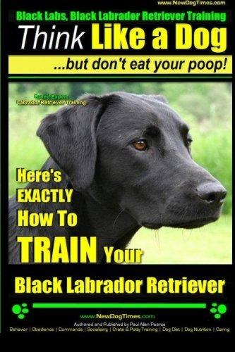 Labrador Negro Entrenamiento Labrador Retriever Negro   P