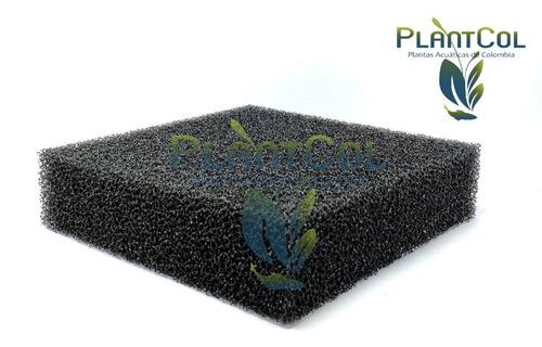 Espuma Biológica 20x20x5cm Guata Negra