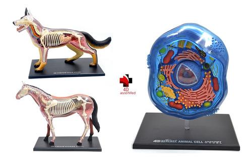 Imagem 1 de 8 de Anatomia Do Cavalo, Cachorro E Celula Animal 4d Master