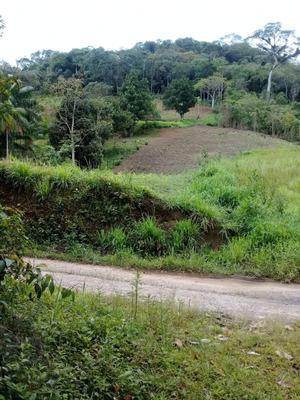 Sitio Em Miracatu Com Nascente De Água Pura