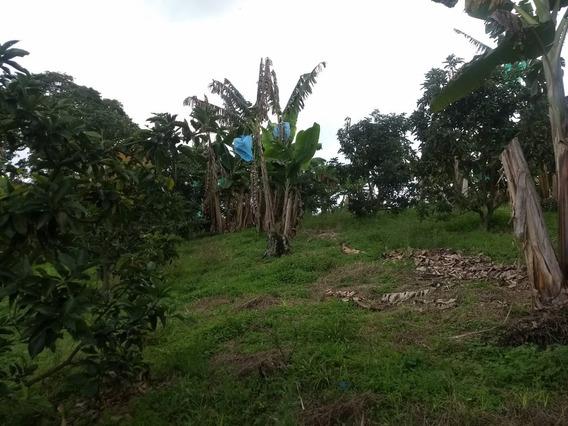 Se Vende Lote Vda Mesa Alta Quimbaya - Filandia