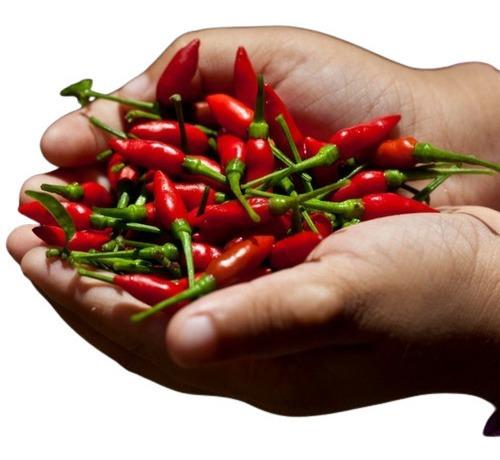 Imagem 1 de 3 de 20 Sementes De Pimenta Malaguetinha Capsicum Chili