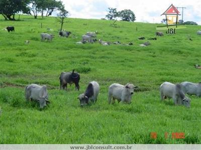 Fazendas À Venda Em Parana/to - Compre O Seu Fazendas Aqui! - 1217728