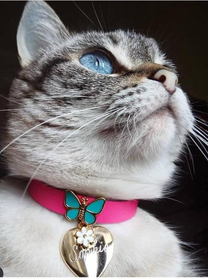Coleira Para Gatos Com Nome E Telefone Gravados