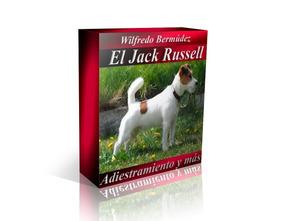 El Jack Russell Adiestramiento Y Mas