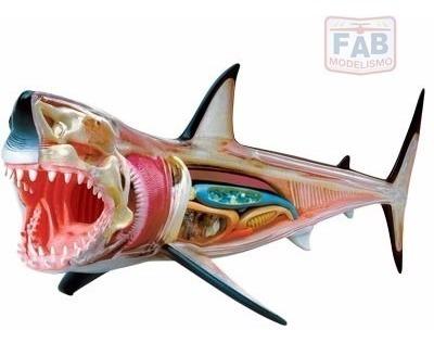 Modelo De Anatomia 4d Para Ensino Veterinário - Tubarão