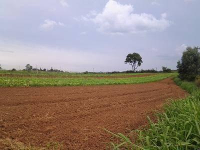 Sítio À Venda, 89000 M² Por R$ 3.115.000 - Chácara Tropical (caucaia Do Alto) - Cotia/sp - Si0079
