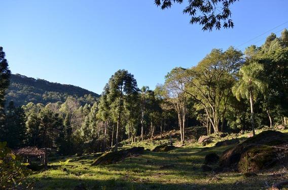 Sítio À Venda, 50000 M² Por R$ 250.000,00 - Serra Grande - Gramado/rs - Si0003
