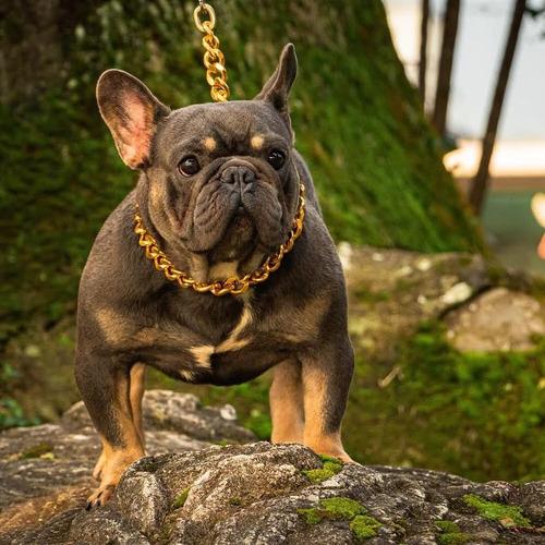 Montas Bulldog Francés Triple Carrier