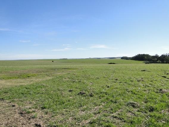 Campo 1137 Has - Uruguay - Ruta 14